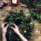 5 начина да направите Коледа по-зелена тази година - Напук на целия негативизъм и мрачното настроение, озарете празника с добро настроение