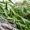 Традиционни билки срещу грипа - Четири билки повишават имунитета ни през зимата